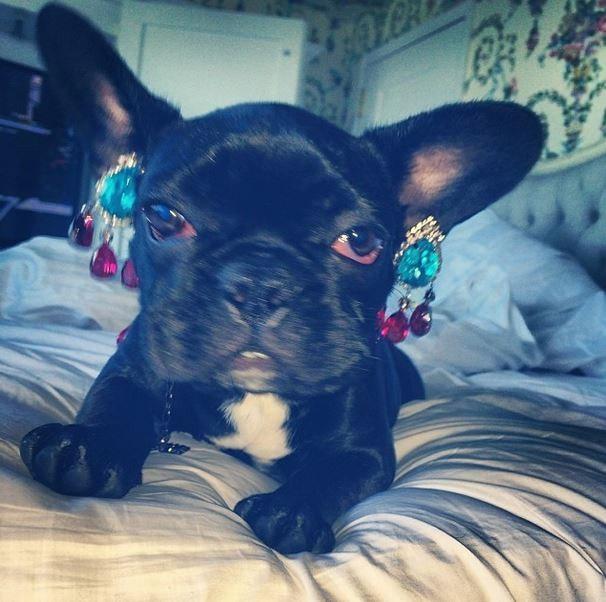 Lady Gaga se envolve em polêmica com o PETA