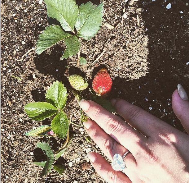 Depois de muita dedicação, Lady Gaga comemora novidade em seu jardim. Confira!