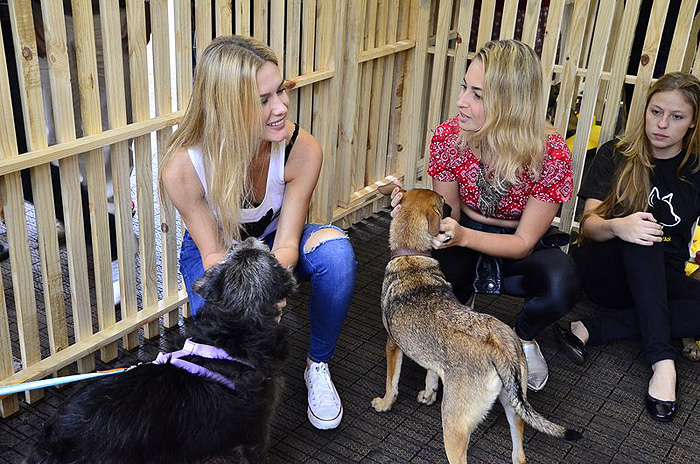 Fiorella Mattheis chora ao receber prêmio do Dia da Adoção Pet