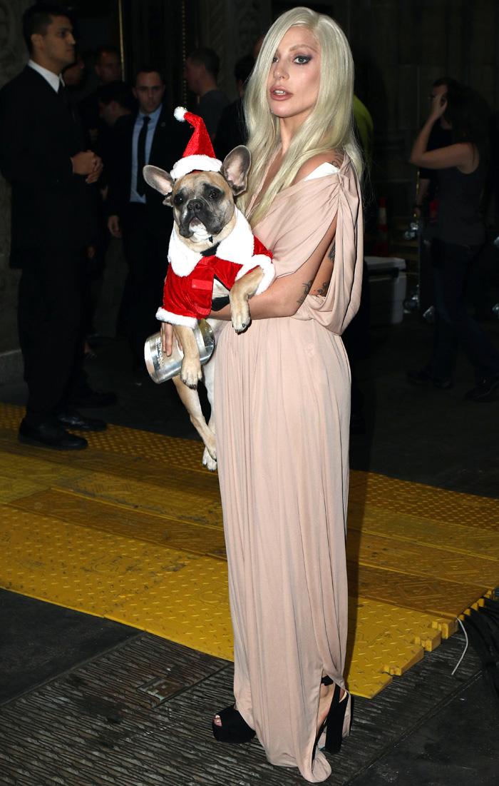Com cachorros vestidos de Papai Noel, Lady Gaga chega em NY