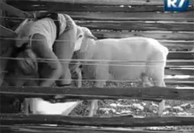 Fazenda: Mulher Filé leva cabeçada de ovelha e toma um susto