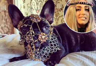 Lady Gaga se envolve em polêmica com o PETA - Reprodução
