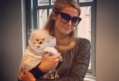 Paris Hilton paga R$ 29 mil em cachorro e enfurece a PETA  - Reprodução