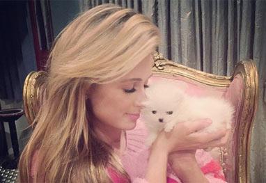 Paris Hilton apresenta o seu novo cachorrinho, avaliado em R$ 30 mil - Reprodução/Instagram