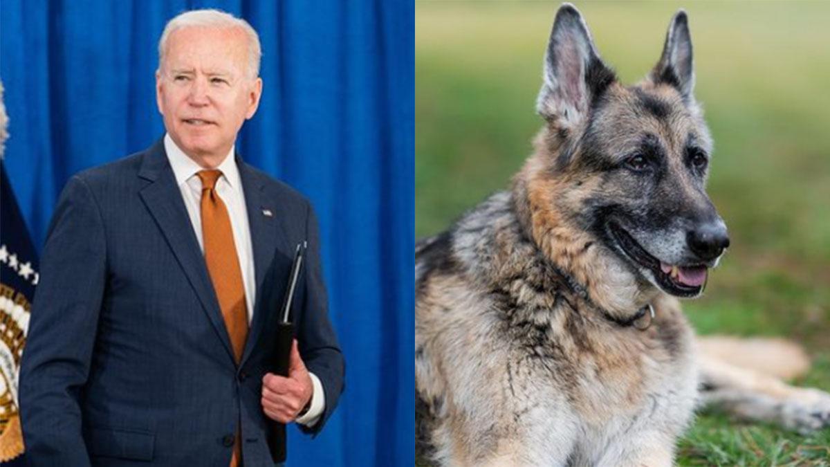 Joe Biden e seu cachorro, Champ