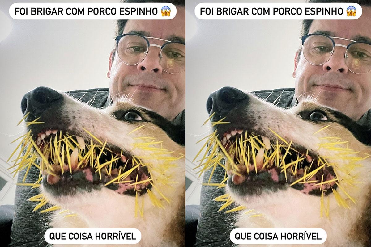 Cachorro de Celso Portiolli ataca porco espinho
